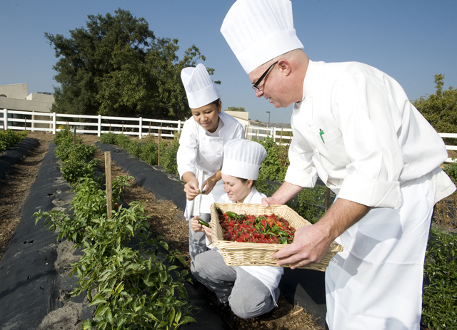 Student Wins National Award with Culinary Garden Design