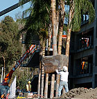 A 25 foot Queen Palm is lifted into position outside the parking structure at Cal Poly Pomona.