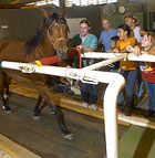 A horse named Charlie walks on the treadmill under the watchful gaze of members of the summer horse camp at the W.K. Kellogg Arabian Horse Center.