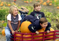 Prepare to Pick Pumpkins From Cal Poly Pomona's Pumpkin Patch!