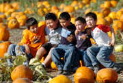 Pumpkins Aplenty at Annual Festival