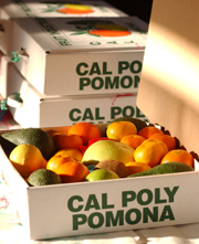 Give the Gift of Cal Poly Pomona Fruit