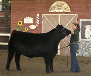 Livestock Show Teams Find Success at L.A. County Fair