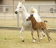 Foal Patrol: Arabian Horse Center Welcomes New Family Members