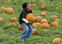 Pick Pumpkins From University's Pumpkin Patch (2005)
