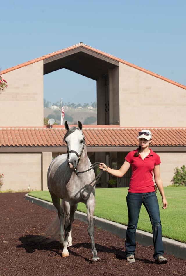 Megan Herr walks with CP Tatiana at the Arabian Horse Center September 23, 2011.