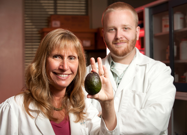 Participants in Cholesterol Study Will Receive Free Avocados