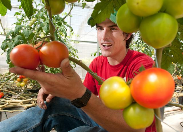Fresh Produce Year-Round at Hydroponics Lab