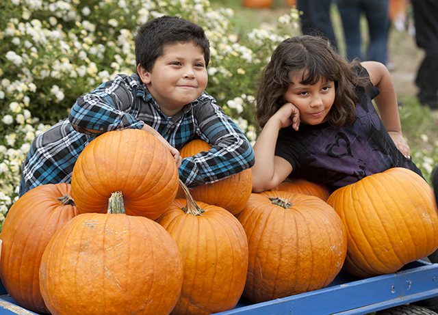 Pumpkin Festival Keeps Farm Store Busy