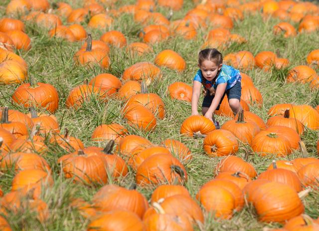 Pumpkin Festival's Roots Run Deep
