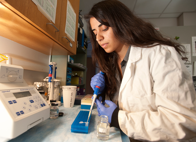 Environmental biology major Monica Santander sequences the DNA of sea slugs to learn more of their biodiversity.