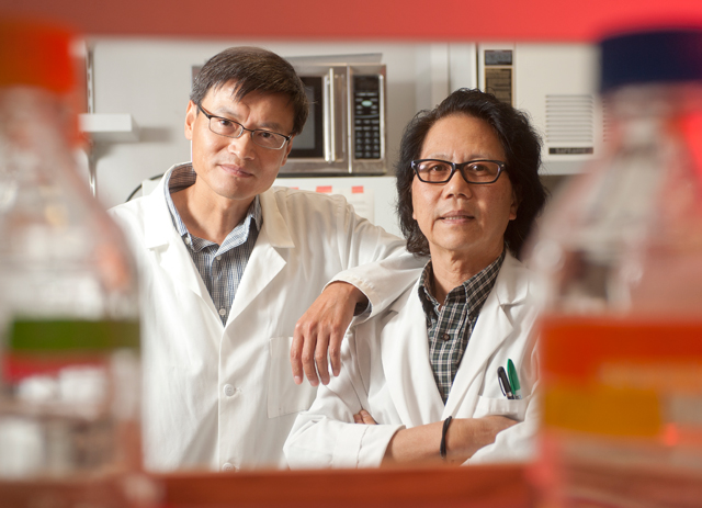 Joint Research into Nicotine and Diabetes Finds Crucial Connection