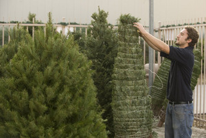 Christmas Trees Arrive at Farm Store