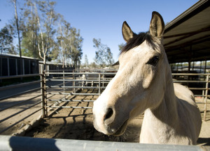 Windfall Gift Adds to University's Equine Legacy
