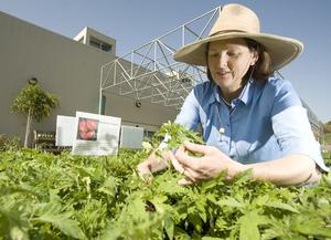 Growing Tomatoes 101