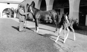 W.K. Kellogg is pictured with Pep and 12-day-old Fasal in the original Kellogg House Stables in 1929.