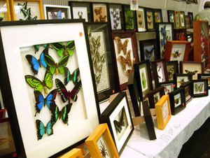 Buzzing for More: Insect Fair Returns to BSC