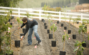 Ryan Connelly places trees in the culinary garden on April 10, 2009.