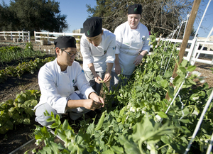 Student Partnership Honored in Culinary Garden Project