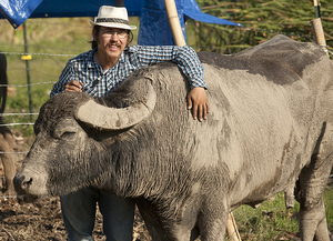 Master's Thesis Requires Research, Persistence and Water Buffalo