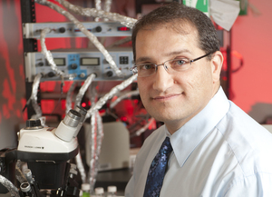 Biology Professor Receives CSU Research Award