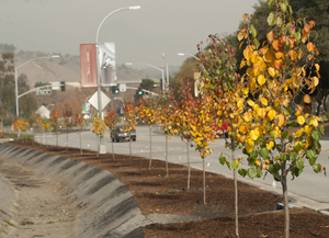 Donation Brings More Beauty and Color to Campus