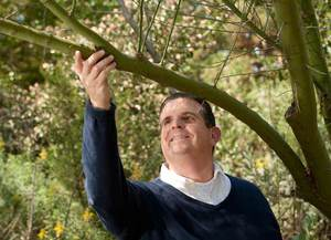 Biology Professor Receives Grant to Study Desert Trees