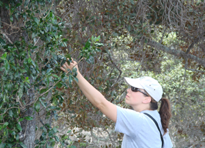 Shared Grant to Save Threatened Plant Species