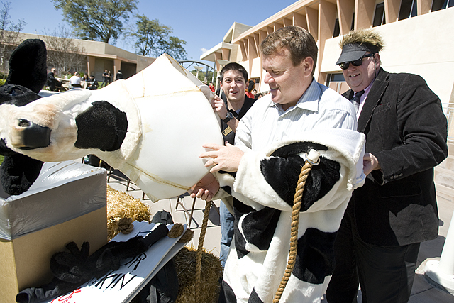 Dean Andy Feinstein gets some help with a cow costume from Associate Dean Michael Godfrey during Chick-Fil-A Dean's event at the Collins College of Hospitality Management at Cal Poly Pomona.