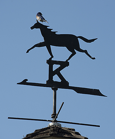 Weathervane and bird.jpg