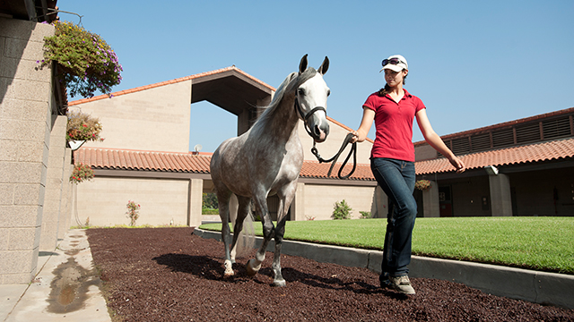 Kate Smith walks a horse at the W.K. Kellogg Arabian Horse Center.