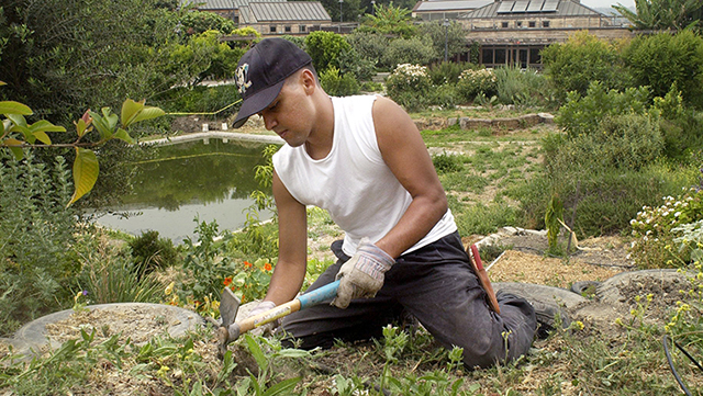 A student works in a planter at the Lyle Center for Regenerative Studies.