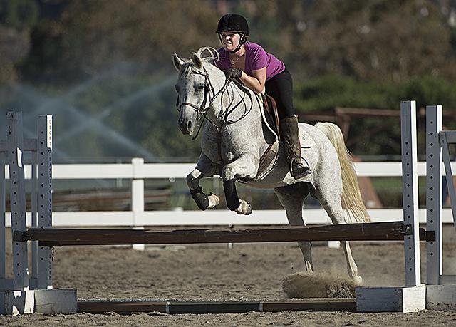 Arabian Horse Jumper