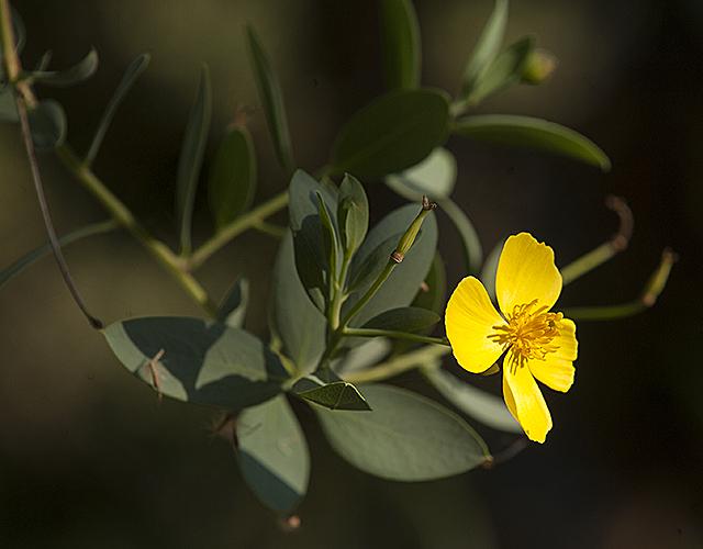 Biotrek Bloom
