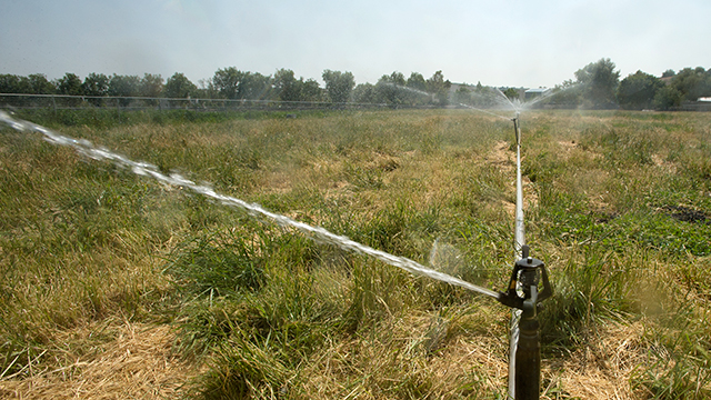Cal Poly Pomona will augment its water conservation efforts to meet state restrictions.