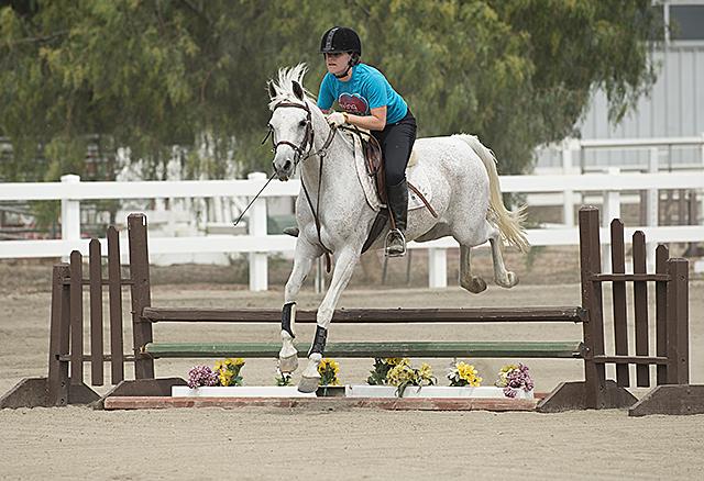 Arabian Horse Center   PolyCentric