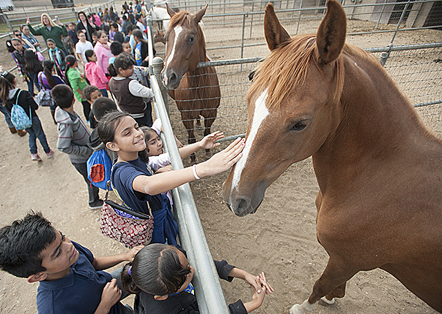 Lehigh Elementary School Students Meet Arabian Horses