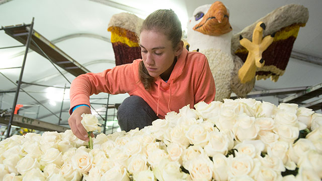Sierra Becker puts roses of the Cal Poly Universities float at the Rose Bowl in December 2014.