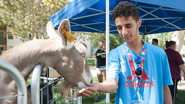 A member of the Special Olympics team from Libya feeds a young goat during a visit by Danny's Farm Petting Zoo near the Suites where teams from around the world are staying.