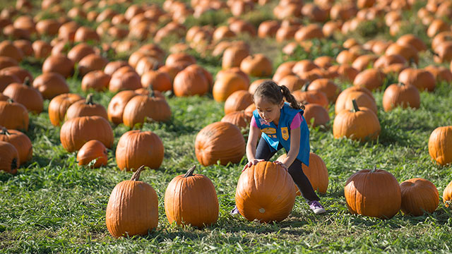 The annual Pumpkin Festival returns in October with new attractions.