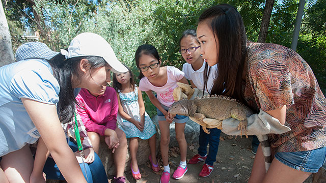 Chinese students meet Galaxy, a green iguana, during a tour of BioTrek during Discover Camp at the College of Science at Cal Poly Pomona. The camp is run by the SEES program.