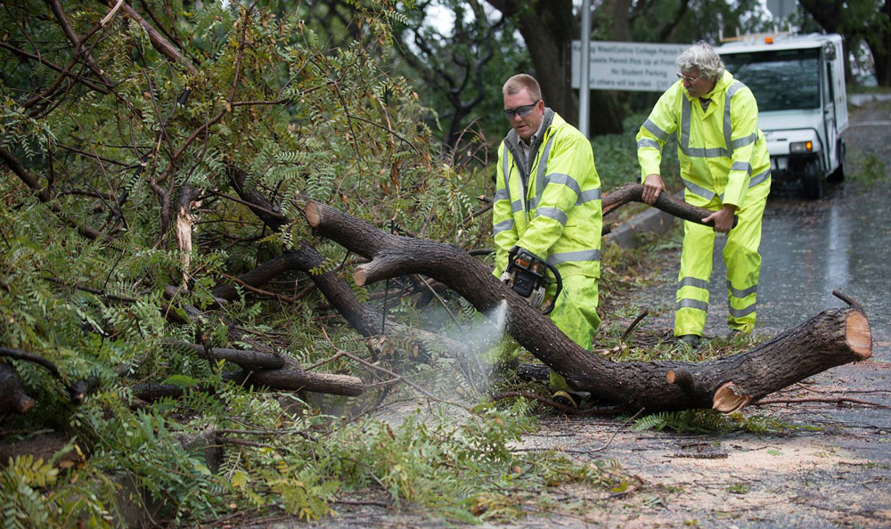 Workers remove a tree toppled by stormy weather near the Collins College.