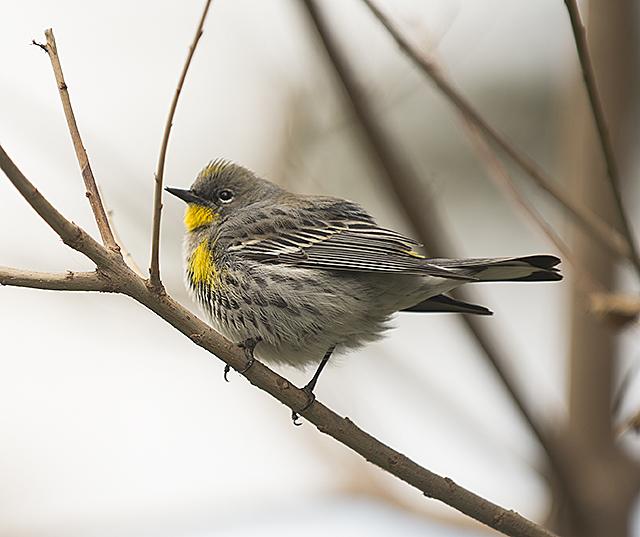 Japanese Garden Bird