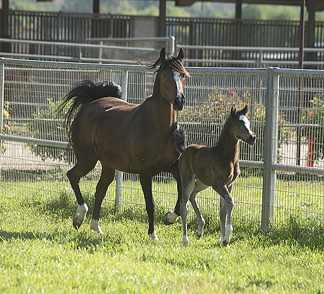 Colt and Mother