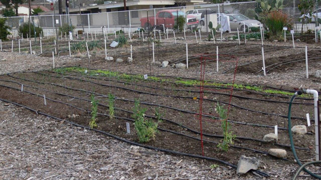 Cal Poly Pomona and the nonprofit group Pomona Hope teamed up to submit a grant proposal for the Center Street Community Garden.