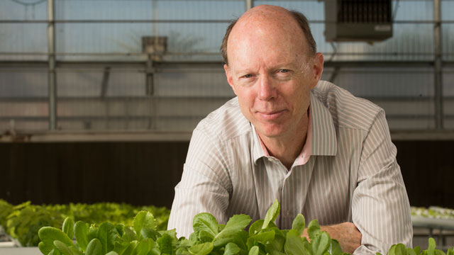 Professor David Still recent received a $400,000 state grant to study how to make lettuce more efficient to grow.