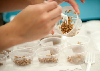 Brown rice made from Locust and cricket flour at Food and Nutrition Lab taste test at Cal Poly Pomona.