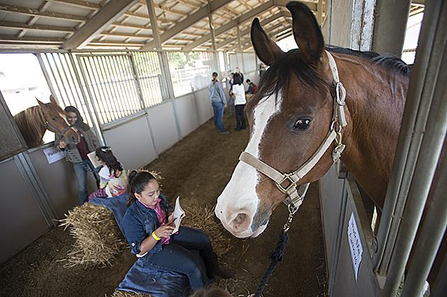 Reading to Horses