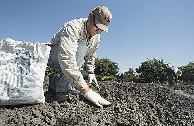 Pumpkin Patch Planting