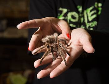 This year, the Pumpkin Festival is expanding to include the annual Cal Poly Pomona Insect Fair.